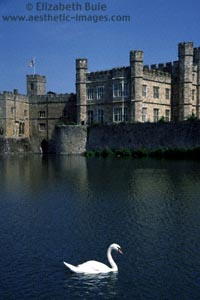 A swan swims in the lake surrounding Leeds Castle, Kent (image no. C2F3-30, © Elizabeth Buie)